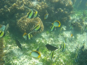 Snorkeling on the reef