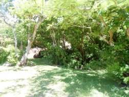 garden to house