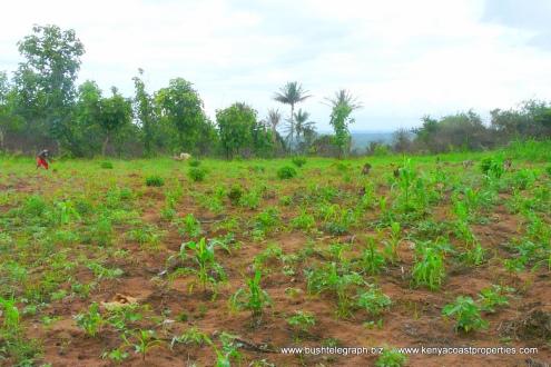 Field tilling