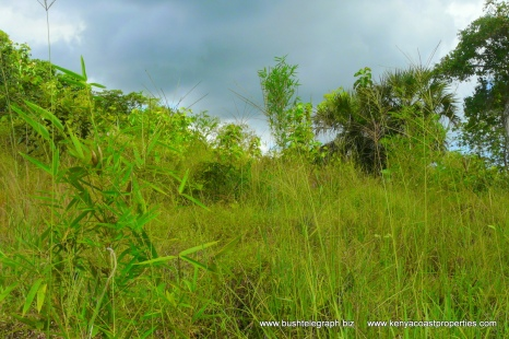 Field with bamboo