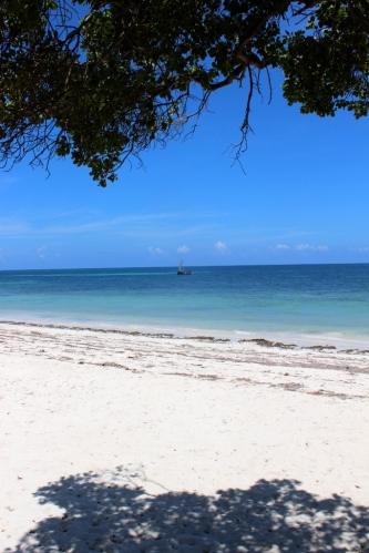 dhow beach from under tree
