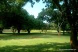 Single acre1