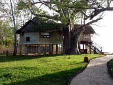 baobab and room