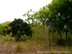 Kilifi creek plot1