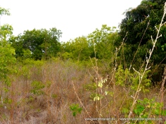 Kilifi Creek plot2