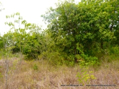 Kilifi Creek plot6