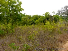Kilifi Creek plot7