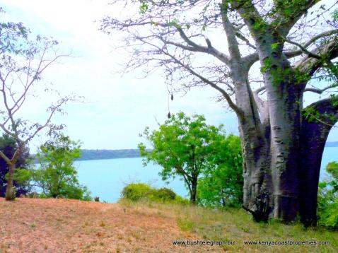 Kilifi Creek View4