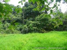 P 5 to right of mango tree