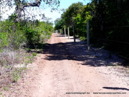 Arabuko Sokoko Forest border