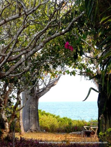Baobab to sea