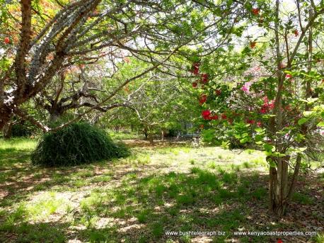 kilifi-bofa-garden