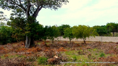 Baobab and wall