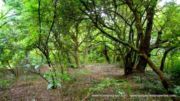 trees landscape2