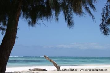 beach-and-tree