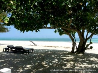 beach-tree-sea