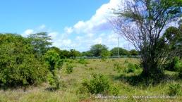 kilifi-plantations-plot
