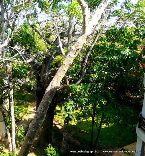 Terrace view Baobab