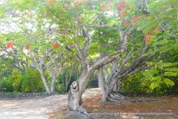 driveway trees