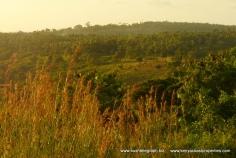 grass to hills