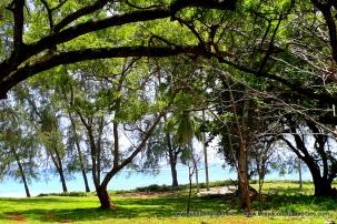 Diani Beach 3