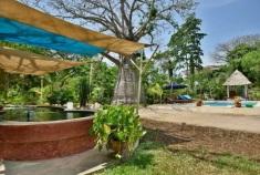 koi pond to pool baobab