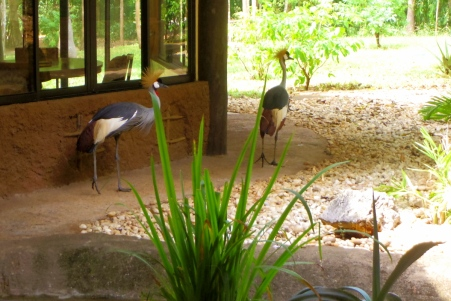 sitting room cranes