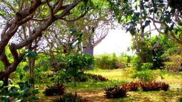 gardens to baobab