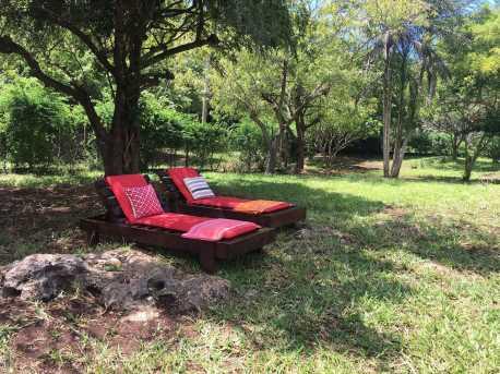 sunbeds under tree