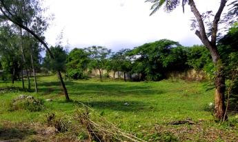grassy plot