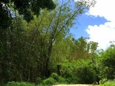 Plot 1381 Farm with Bamboo