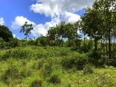 Plot 1381 Farm with Orchard & Teak Trees