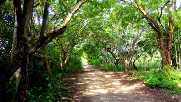 treelined road to plot