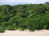 beach and trees