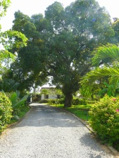 driveway to gate