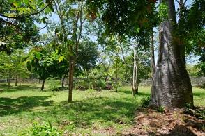 baobab to gardens