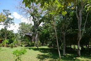 baobab with platform2