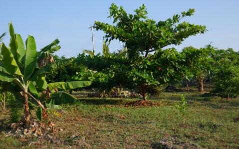 plot trees2