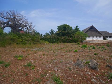 baobab to south
