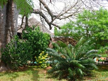 plantsmature