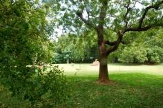 back garden1