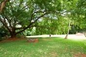back garden3