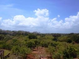 Shimba hills view