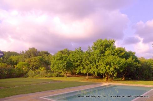 pool to trees