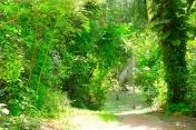 path down1